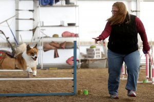 Billings Gazette Story Dog Sports